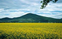Campo amarillo Foto de archivo libre de regalías