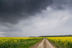 Campo amarillo Fotografía de archivo