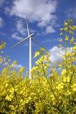 Campo amarillo brillante de la rabina con el motor de viento Fotografía de archivo