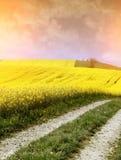 Campo amarillo con la violación de la semilla oleaginosa Fotos de archivo libres de regalías