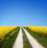 Campo amarillo con la violación de la semilla oleaginosa en resorte temprano Foto de archivo