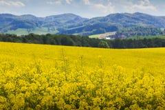 Campo amarillo de la violación de semilla oleaginosa Fotos de archivo libres de regalías