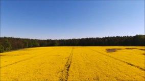 Campo amarillo de la violación de semilla oleaginosa metrajes