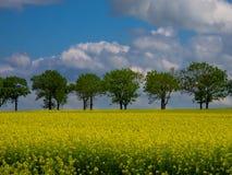 Campo amarillo de la violación Foto de archivo libre de regalías