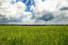 Campo amarillo debajo de las nubes Imagen de archivo