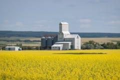Campo amarillo del Canola con el elevador de grano en distancia imágenes de archivo libres de regalías