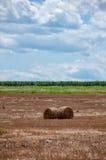 Campo amarillo del trigo con los rodillos del trigo Fotografía de archivo libre de regalías