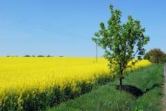 Campo amarillo hermoso Imagen de archivo libre de regalías