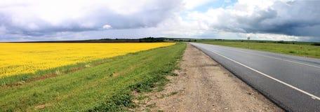 Campo amarillo sembrado con la violación Foto de archivo libre de regalías