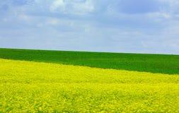 Campo amarillo y verde Imagenes de archivo