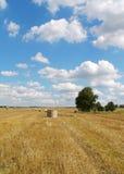 Campo & cielo blu Immagini Stock Libere da Diritti