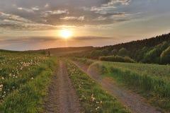 Campo ancho del diente de león cerca del camino de la puesta del sol imagenes de archivo