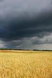 Campo antes da tempestade Imagens de Stock