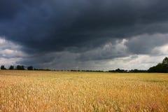 Campo antes da tempestade Fotos de Stock Royalty Free