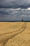 Campo antes de la cosecha Foto de archivo
