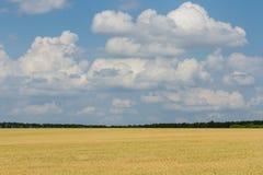 Campo após a colheita Imagens de Stock
