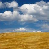 Campo após a colheita Imagem de Stock