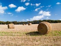 Campo após a colheita Imagem de Stock Royalty Free