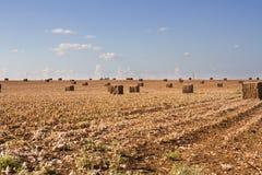 Campo após a colheita Fotografia de Stock Royalty Free