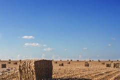 Campo após a colheita Imagens de Stock Royalty Free