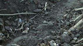 Campo após a colheita do girassol video estoque