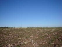 Campo após a colheita no céu azul do fundo fotos de stock