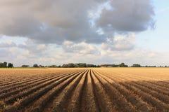 Campo arado após a colheita no por do sol Imagem de Stock Royalty Free