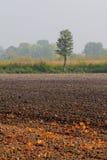 Campo arado con las hojas del roble Imagen de archivo libre de regalías