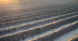 Campo arado en un d?a soleado Preparaci?n para plantar verduras Agricultura Tierras de labrant?o Foco selectivo suave imagen de archivo libre de regalías