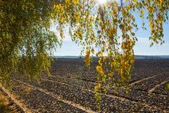 Campo arado, luz del sol a través de las hojas amarillas Foto de archivo libre de regalías