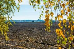 Campo arado, luz del sol a través de las hojas amarillas Imágenes de archivo libres de regalías