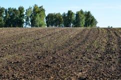 Campo arado para plantar Fotografía de archivo libre de regalías