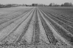 Campo arado pronto para colheitas novas Fotos de Stock Royalty Free