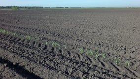 Campo arado pronto para a sementeira filme