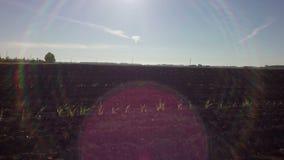 Campo arado pronto para a sementeira vídeos de arquivo