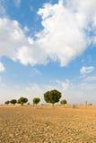 Campo arato agricolo della terra in deserto Immagine Stock