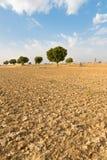 Campo arato agricolo della terra in deserto Fotografie Stock Libere da Diritti