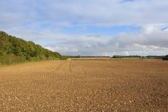 Campo arato con bridleway frondoso Immagine Stock Libera da Diritti