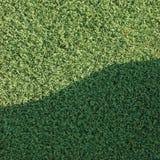 Campo artificiale di struttura del prato inglese del tappeto erboso di falsificazione dell'erba Immagini Stock Libere da Diritti