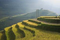 Campo asiático do arroz em colher a estação em MU Cang Chai, Yen Bai, Vietname Os campos de almofada Terraced são usados extensam Fotografia de Stock Royalty Free