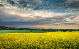 Campo Austrália do Canola Fotografia de Stock Royalty Free