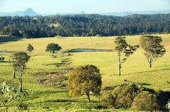 Campo australiano Fotografia de Stock