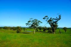 Campo australiano bonito. Foto de Stock