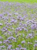 Campo azul Fotos de Stock Royalty Free
