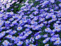 Campo azul Fotografia de Stock Royalty Free