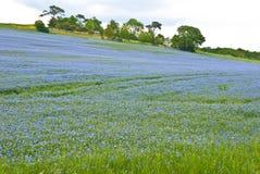 Campo azul e verde imagens de stock