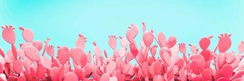 Campo azul incomum do cacto no fundo cor-de-rosa Foto de Stock Royalty Free