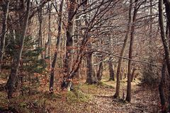 Campo bávaro, madera en invierno Imagenes de archivo