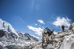Campo bajo de Everest Cara del norte Fotos de archivo libres de regalías