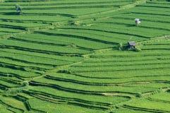 Campo bali del arroz de arroz Foto de archivo libre de regalías